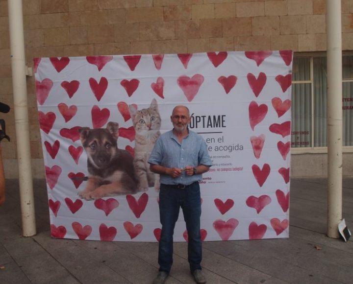 Campaña mascotas